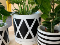 Fiona's painted pots are the finishing touch your indoor plants need