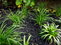 Why mulch matters: How to keep your garden hydrated this summer